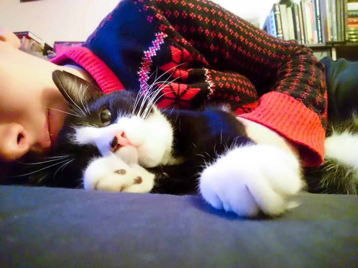 Интересни ситуации кои докажуваат дека мачките нè имаат како нивни миленици, а не обратно