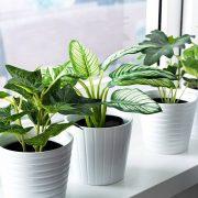 Овие 3 собни билки мора да ги има во секој дом: Во рок од 1 час ќе ги отстранат сите вируси од воздухот!