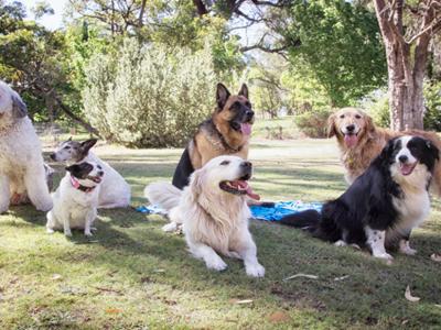 """Родени """"специјалци"""": 10 раси кучиња кои го чуваат домот подобро од алармните системи"""