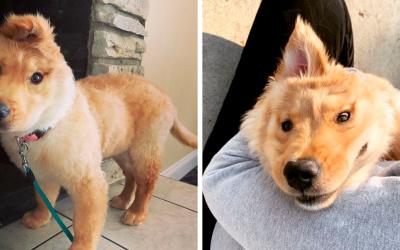 Случајна повреда при раѓање го оставила ова кученце со едно уво и тоа ги освојува сите со својот изглед на еднорог