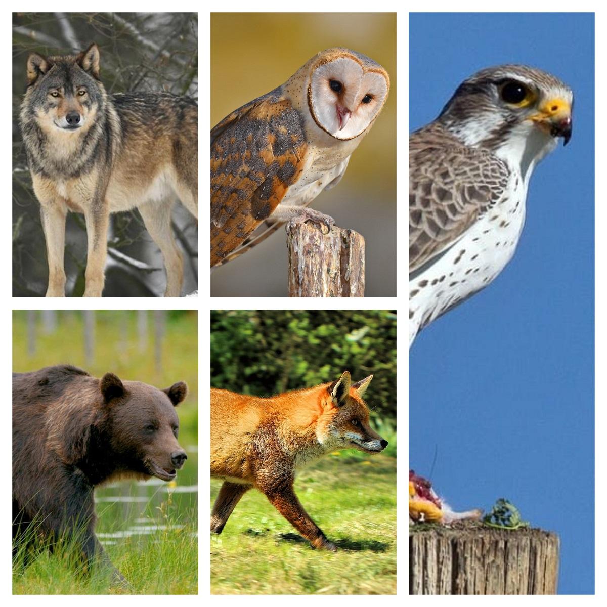 Откријте нешто ново за себе: Кое од овие 5 животни ве фасцинира најмногу?