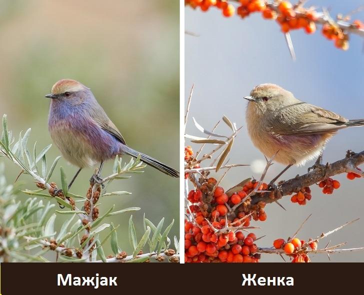 Природата создала птица како од бајките, се чини како да доаѓа од рајот