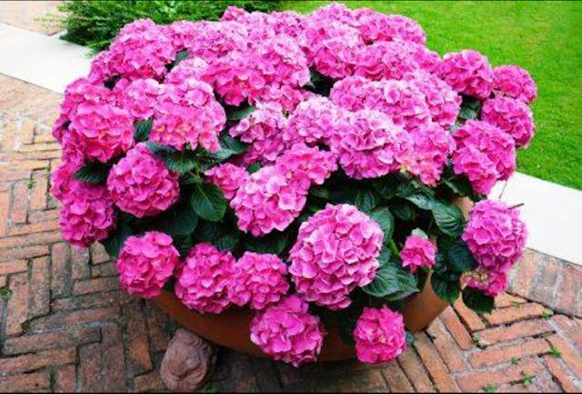 Секој цвет има некое значење: Некој е добро да го подарите, но некој треба да го избегнувате за подарок, бидејќи велат дека носи тага