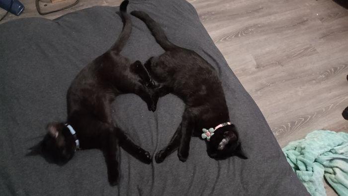 20 фотографии што докажуваат дека црните мачки не носат несреќа