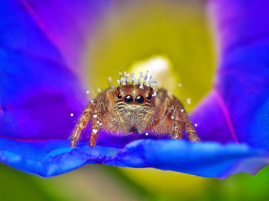 Фотограф од Индија фотографира шарени пајаци и други симпатични животни што ќе ве воодушеват