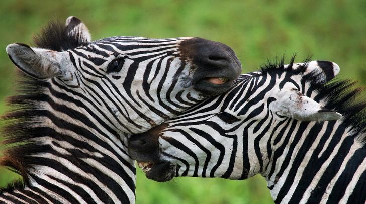Фотограф од Русија посетува опасни места за да ја покаже убавината на дивиот животински свет