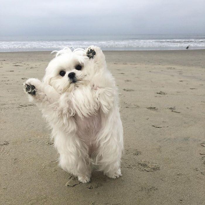 Ова е Коко и таа навистина сака да стои на своите задни нозе
