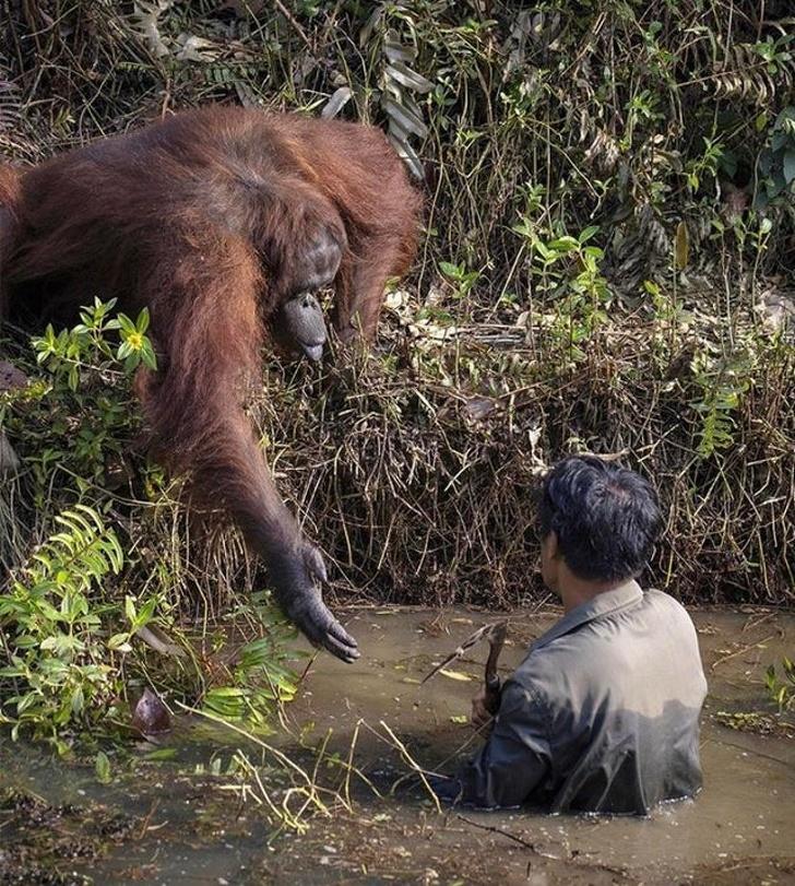 16 фотографии што докажуваат дека животните можат да го направат невозможното