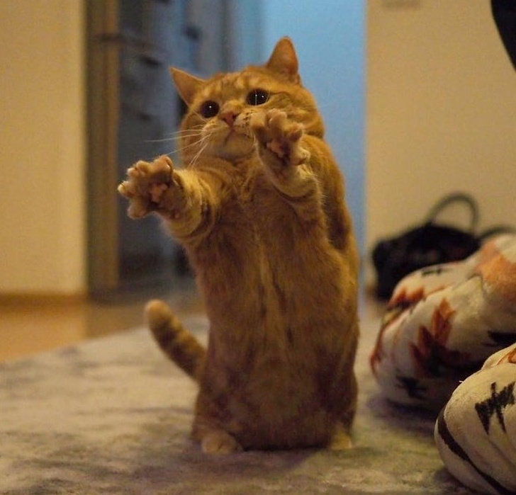19 фотографии кои докажуваат дека и животните имаат чувства
