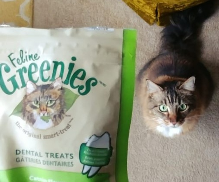 15 мачки кои нè натераа да помислиме дека се храна