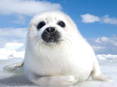 Ќе ви го подобрат расположението: Ова се 10-те најслатки животни во светот