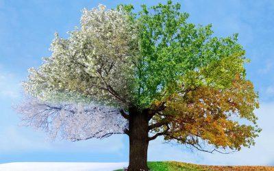 Пролет, лето, есен или зима: Што открива вашето омилено годишно време за вас?