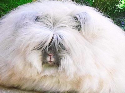 16 миленичиња кои се толку влакнести, па дури можете да ги почувствувате и преку екранот