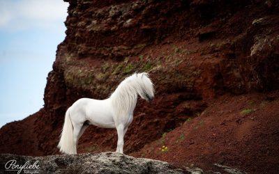 Фотографии од коњи пред неверојатните исландски пејзажи