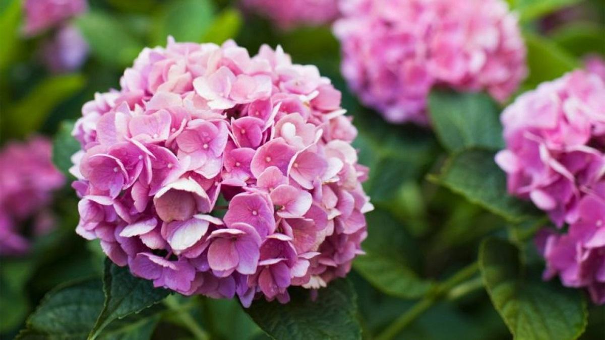 Kралскиот цвет кој го смирува умот: Ова цвеќе треба да ги засадите во дворот или градината!