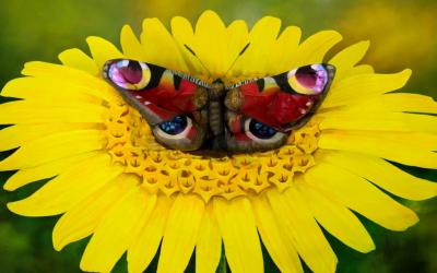 Можете ли да забележите жена во оваа оптичка илузија од Јоханес Стотер?