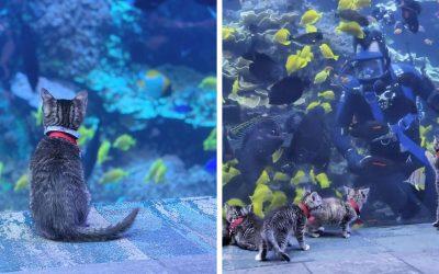Овие мачиња и кученца истражуваат огромен аквариум и веројатно тоа е она што на сите ни е потребно во ова мрачно време