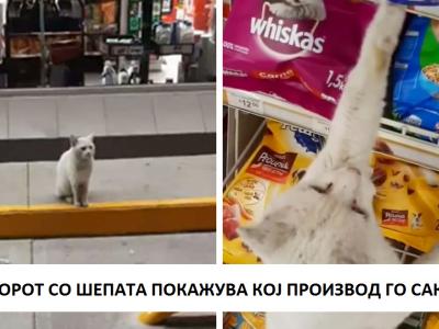 Паметен уличен мачор следи жена до продавница и бара од неа да му купи храна, па таа го вдомува