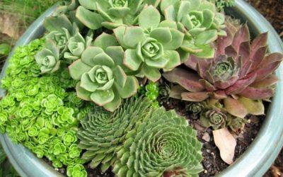 Тоа е чудо од растение и лесно може да се одгледува: Еве зошто е добро да одгледувате чуваркуќа!