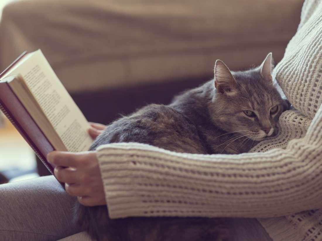 Ветеринарите предупредуваат: Еве на што треба да посветите особено внимание ако сте во самоизолација и имате мачка!