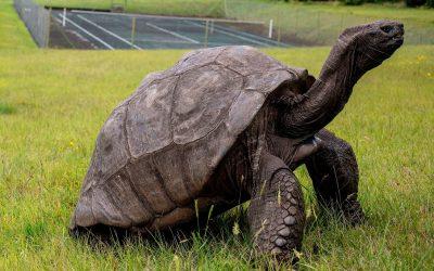 Запознајте го Џонатан: Оваа желка е толку стара што има живеено во 3 века