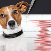 Навистина неверојатно: Како животните можат да ја предвидат смртта и природните непогоди?