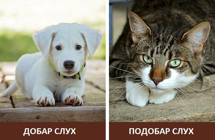 Зошто мачките ненадејно зјапаат во sидот или во празен простор?