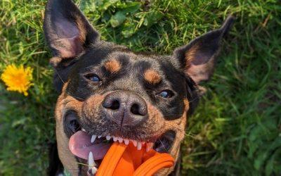 25 фотографии од миленичиња што ќе ви го стопат срцето