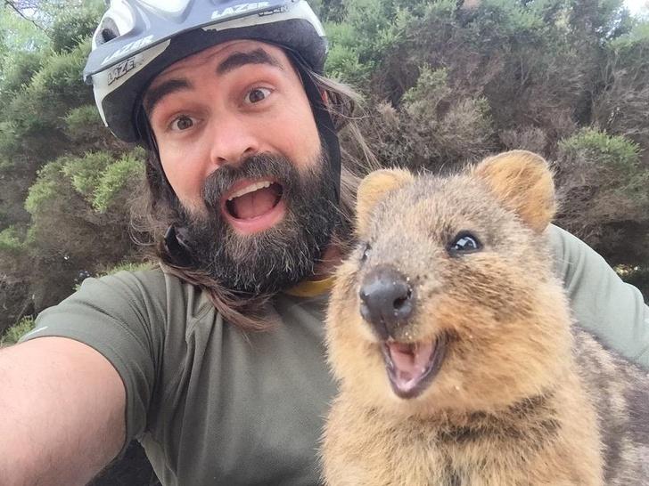 Куоката се нарекува најсреќно животно во светот, а овие фотографии го докажуваат тоа