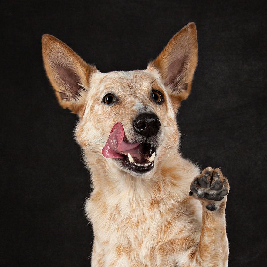 15 фотографии од кучиња со случајно исплазен јазик