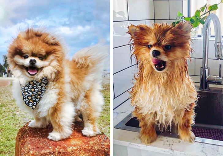 15 фотографии од животни што си ја покажале својата вистинска природа по бањањето