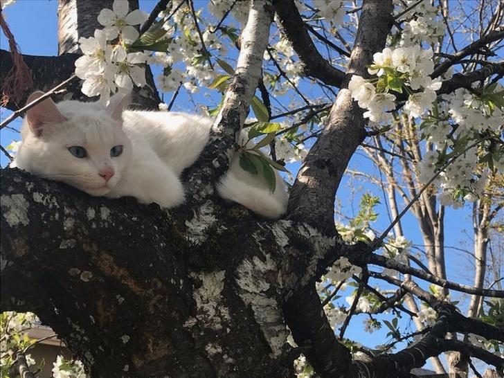 26 фотографии што покажуваат како изгледа пролетта низ целиот свет