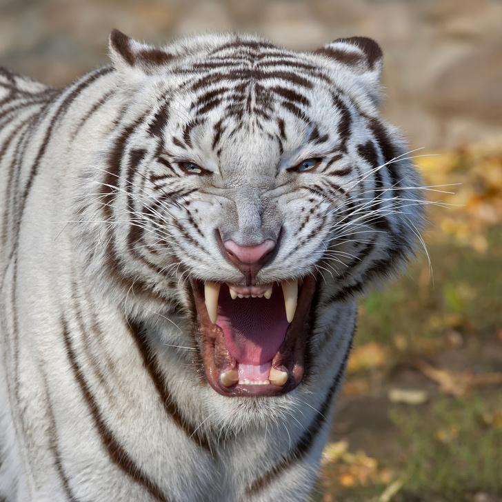 10 животни кои имаат најсилен загриз