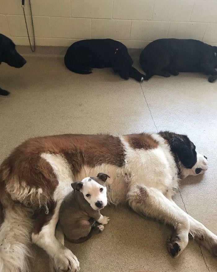 Мало куче бара кучиња со меко крзно за да може да спие на нив