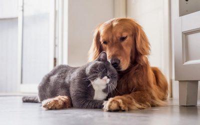 Кој е посреќен - сопствениците на кучиња или на мачки?