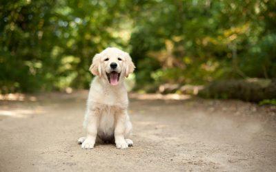 5 раси на кучиња кои можат да помогнат во борбата против депресија