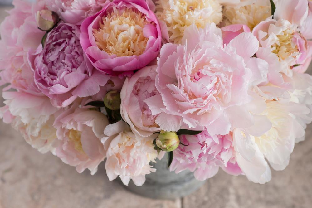 Ако сакате среќен брак, мора да го имате ова цвеќе во вашиот двор: Симбол на мирот, здравјето и благосостојбата