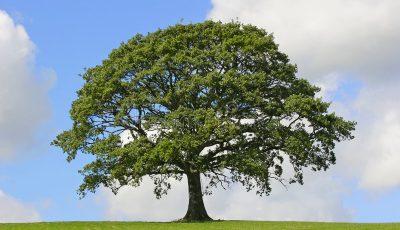 Дрвја што треба да ги засадите во дворот: 7 моќни стебла што ги штитат домот и семејствoто