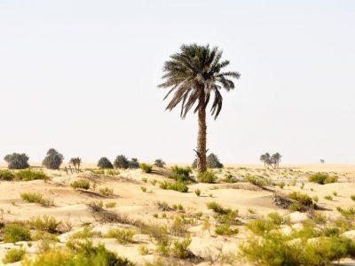 20 дрвја чија желба за живот е толку силна што можат да преживеат сè и сешто