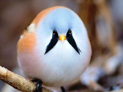 15 уникатни птици што ќе ве зашеметат со својата убавина