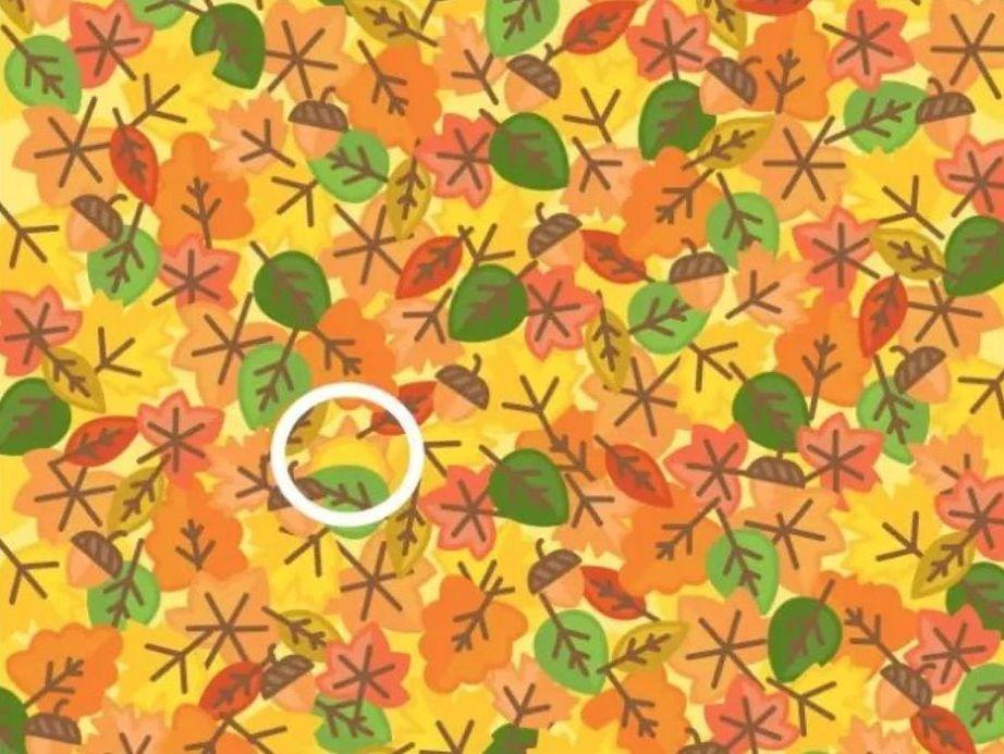 Загатка: Дали можете да го пронајдете сонцето меѓу овие лисја?