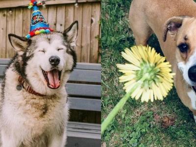 На овие животни не им треба многу за да бидат среќни и тие се пример кој треба да го следиме