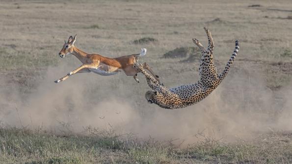 """Најдобрите фотографии од натпреварот за светска фотографија на природата """"Бигпикчр"""""""