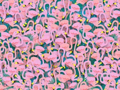 Загатка: Дали можете да ја пронајдете балерината меѓу фламингата?