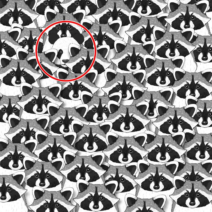 Пронајдете ги скриените предмети во овие 15 загатки