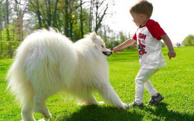 8 работи што треба да ги знаат сите сопственици на кучиња