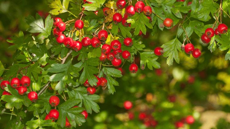 Дрвја што треба да ги засадите во дворот: 7 моќни стебла што ги штитат домот и семејствто