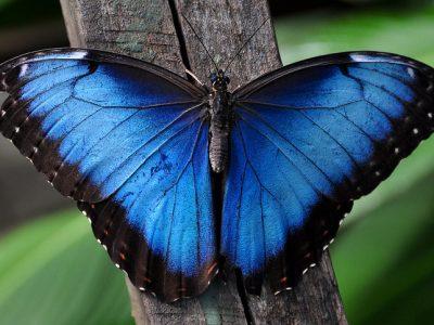 Зошто сините животни се многу ретки?