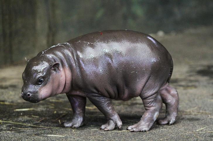 Тест: Дали можете да погодите кои диви животни се овие 15 бебиња?