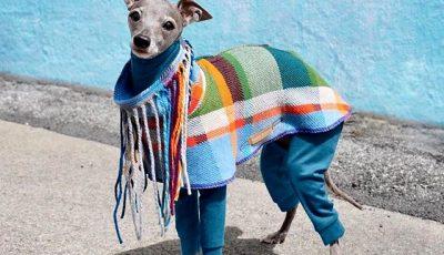 Запознајте ја Тика - модерно куче чијашто гардероба е во склад со трендовите